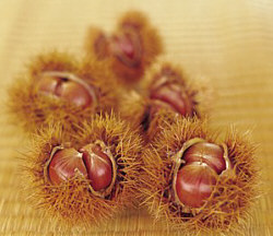 chestnuts-a2d