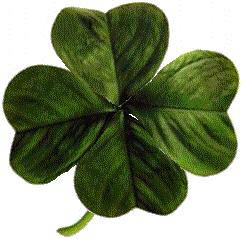 Four-leaved_clover2-wiki