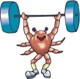 weightlifterscorpio-a2d